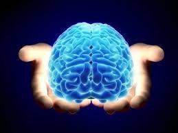 Le quattro intelligenze relazionali: un must per le imprese